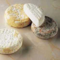Cheese picodon