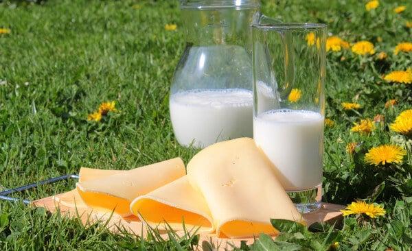 Le lait : ingrédient de base dans la fabrication du fromage